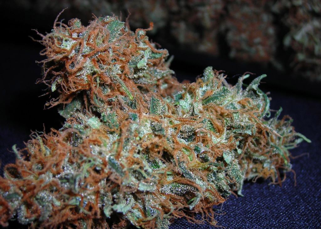 white-widow